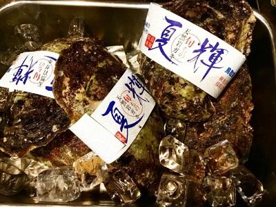 夏輝 鳥取県産 岩牡蠣